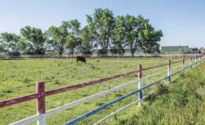 Wood Fence Staining