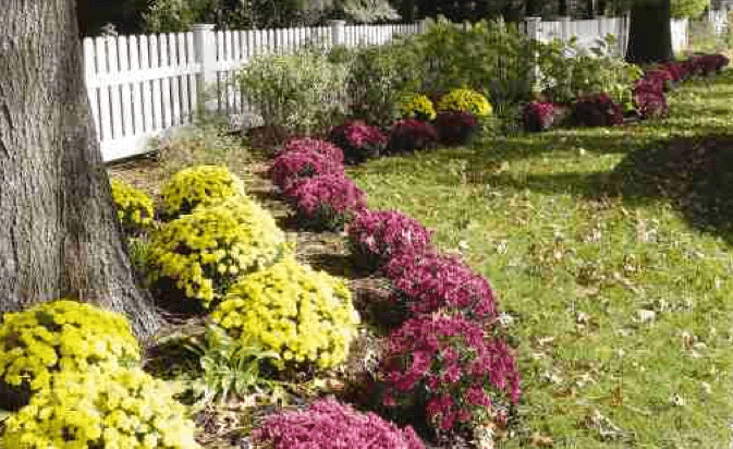 fence ideas and trends
