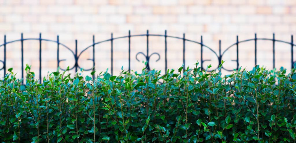 Church fence with bushes city background hd
