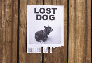 fences stop lost dog
